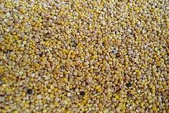 quinoa for tabboule