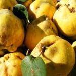 Pomegranate-Quince Relish