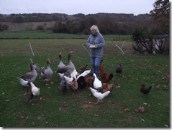 Roz feeds geese in the French countryside