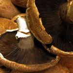 Recipe: Mushroom-Onion-Nut Pate