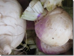 fresh turnips in the market